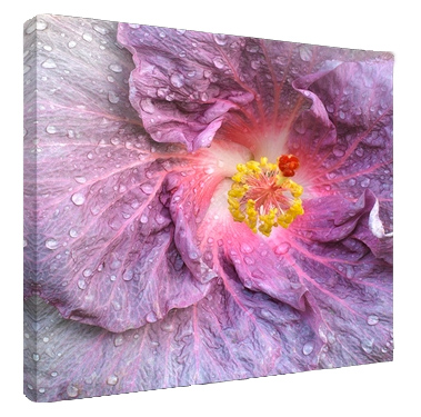 Hibiscus Digital Photo Printed to Canvas
